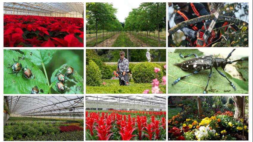 Problemi e prospettive del florovivaismo