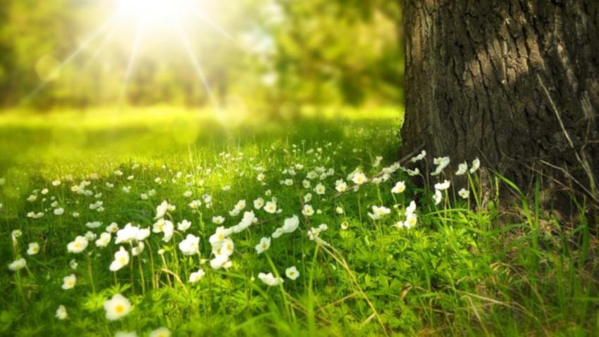 Consigli utili per gli alberi in giardino