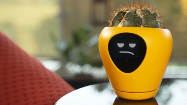 Le piante parlano e postano sui social