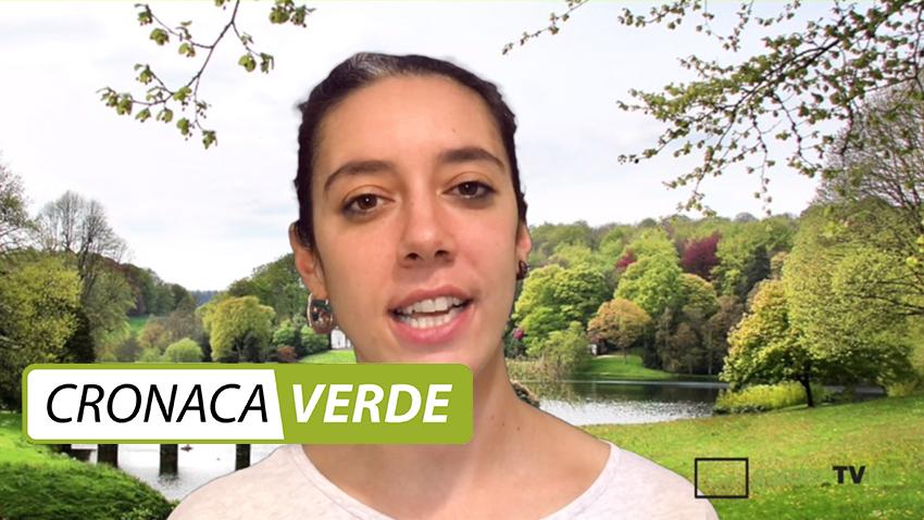 Cronaca Verde: guarda la seconda puntata