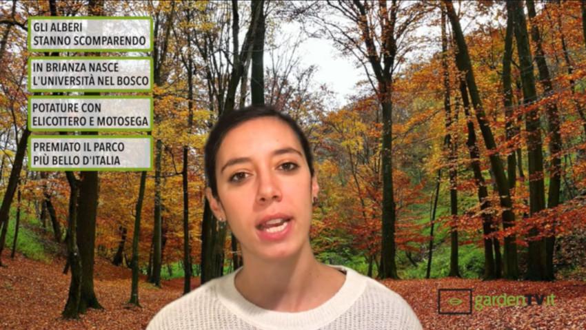 Cronaca Verde: il primo TG del giardinaggio