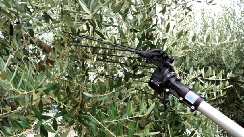 Abbacchiatori elettrici per la raccolta delle olive