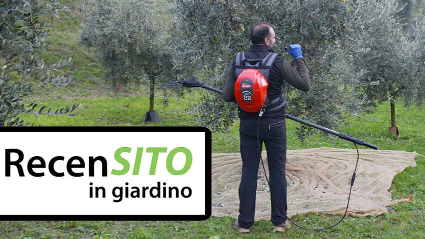 Come raccogliere velocemente le olive