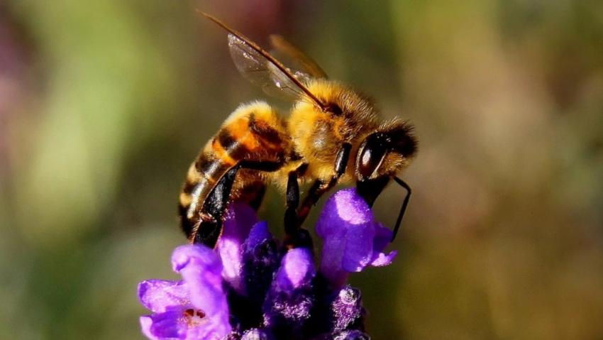 <a href='http://radiogarden.it/come-realizzare-un-giardino-bio-e-naturale/'><u>ASCOLTA IL PODCAST</u></a>  <a href='https://www.gardentv.it/come-realizzare-giardino-bio-naturale-consigli.html'>Il giardino bio ed etico</a>