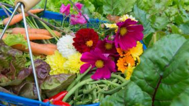 Olio vegetale per la difesa naturale delle piante
