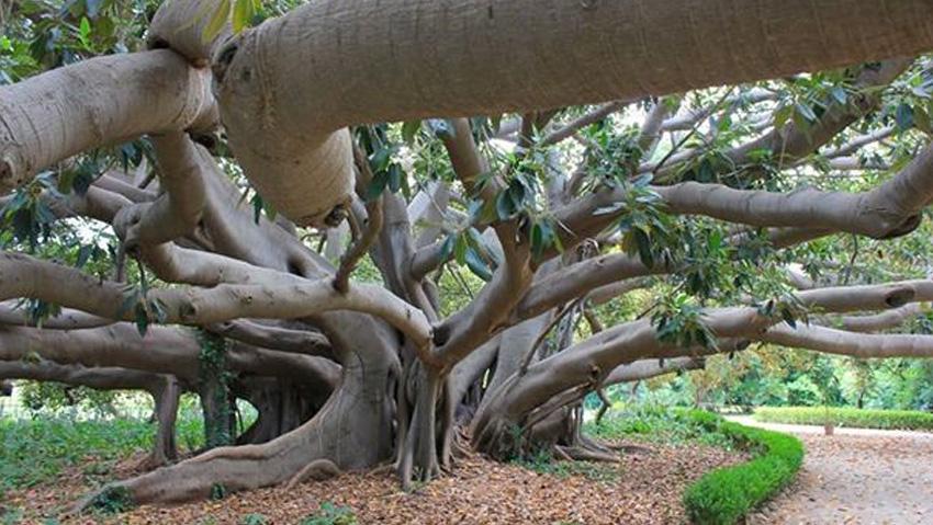 Nuove linee guida per gli alberi monumentali