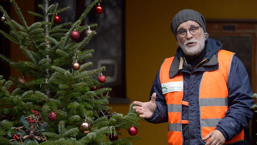 Cosa fare con l'albero di Natale vero, piantarlo o