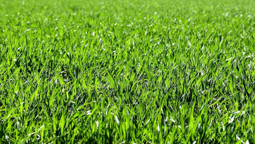 <a href='http://radiogarden.it/semina-del-prato-come-fare-e-quando/'><u>ASCOLTA IL PODCAST</u></a>  <a href='https://www.gardentv.it/come-quando-fare-semina-prato-consigli-giardinaggio-podcast.html'>La semina del prato</a>