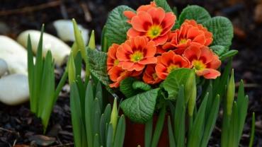 <a href='http://radiogarden.it/idee-per-il-balcone-in-primavera/'><u>ASCOLTA IL PODCAST</u></a>  <a href='https://www.gardentv.it/balcone-fiorito-primavera-quali-piante-scegliere.html'>Il balcone in primavera</a>