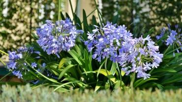 <a href='http://radiogarden.it/quali-bulbi-piantare-in-primavera/'><u>ASCOLTA IL PODCAST</u></a>  <a href='https://www.gardentv.it/quali-bulbi-piantare-primavera-consigli-podcast.html'>Bulbi da piantare in primavera</a>