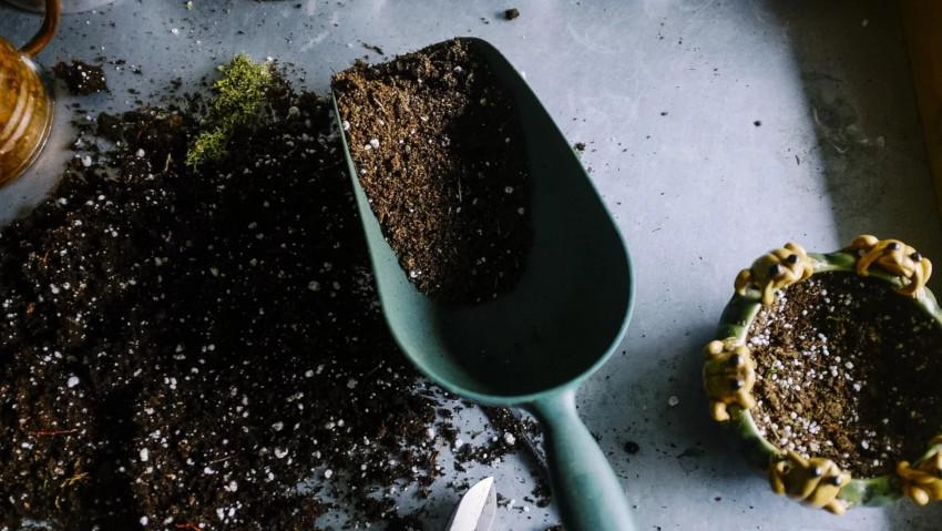 <a href='http://radiogarden.it/come-e-quando-piantare-gli-arbusti/'><u>ASCOLTA IL PODCAST</u></a>  <a href='https://www.gardentv.it/come-piantare-arbusti-consigli-giardinaggio.html'>Piantare gli arbusti</a>