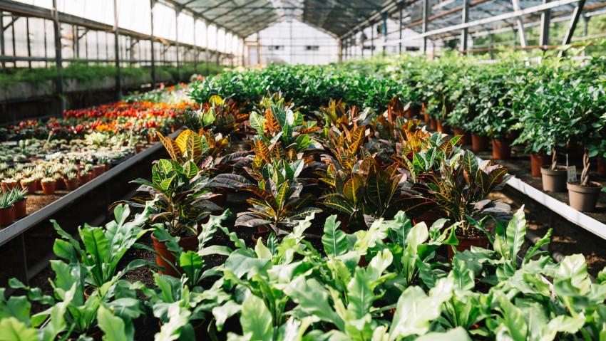 Covid19: problemi e futuro dei garden center
