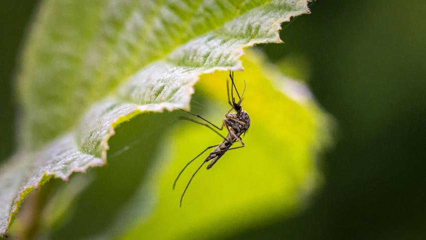 Covid-19: gestione delle zanzare in giardino