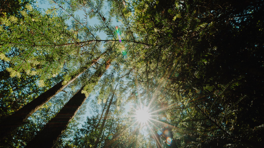 Covid: più alberi potevano salvarci?