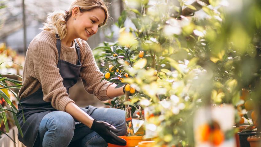 Boom del giardinaggio online: i prodotti più venduti