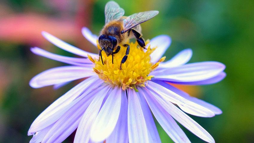 Il linguaggio profumato dei fiori per attrarre gli insetti