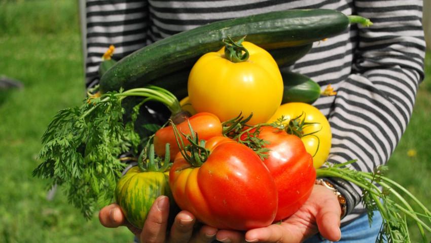 Coltivare l'orto senza il rischio di Salmonella