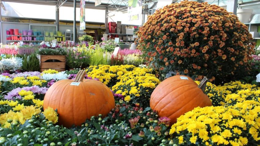 Il Germoglio Garden Center: eventi d'autunno