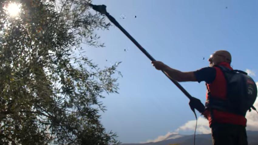 Abbacchiatore potente e confortevole per la raccolta delle olive
