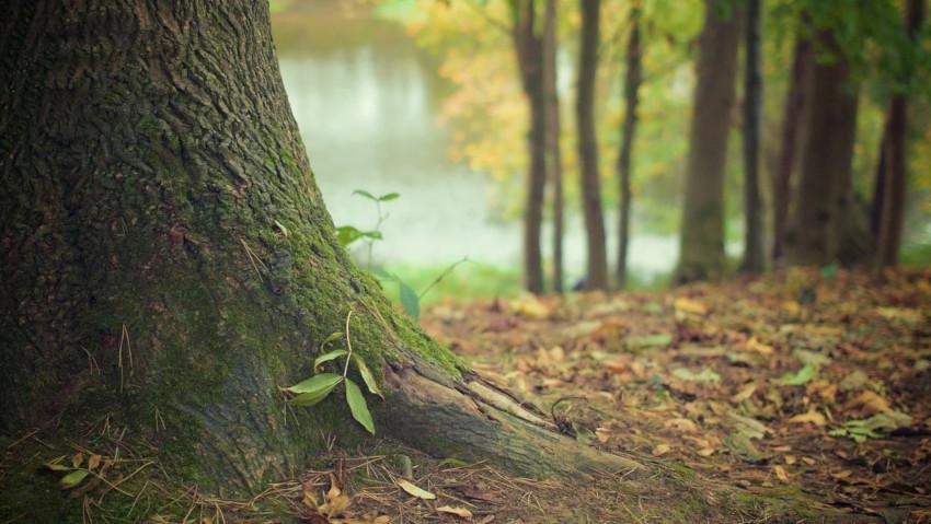 Nuovo corso di formazione per arboricoltori