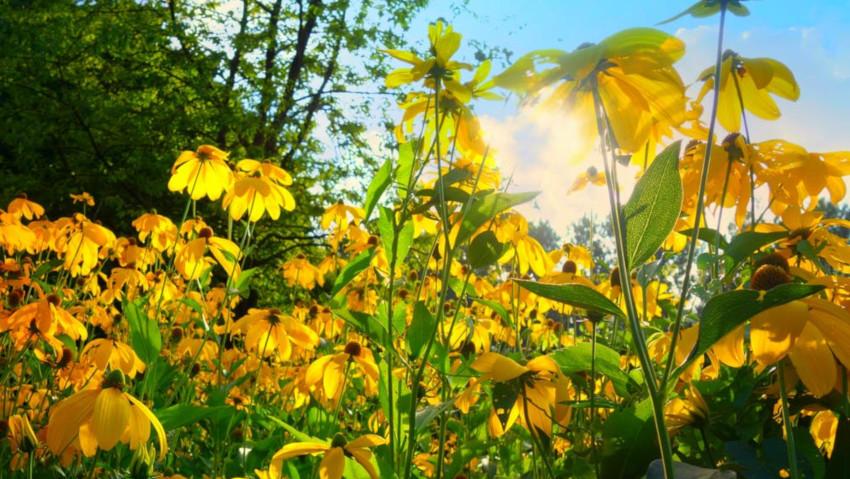 <a href= http://radiogarden.it/come-scegliere-piante-fiori-aiuole-sole-ombra/'><u>ASCOLTA IL PODCAST</u></a> <a href='https://www.gardentv.it/come-scegliere-piante-giuste-aiuole-ombra-sole.html'>Aiuole all'ombra e al sole</a>