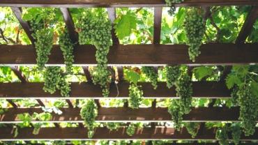 <a href= http://radiogarden.it/quali-piante-scegliere-privacy-giardino/'><u>ASCOLTA IL PODCAST</u></a> <a href='https://www.gardentv.it/privacy-giardino-quali-piante-scegliere-podcast.html''>Privacy in giardino</a>