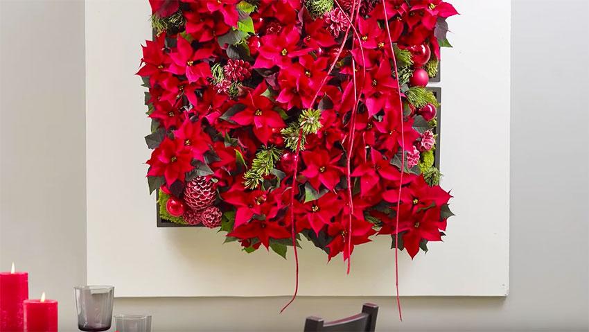 Come fare un giardino verticale con la Poinsettia