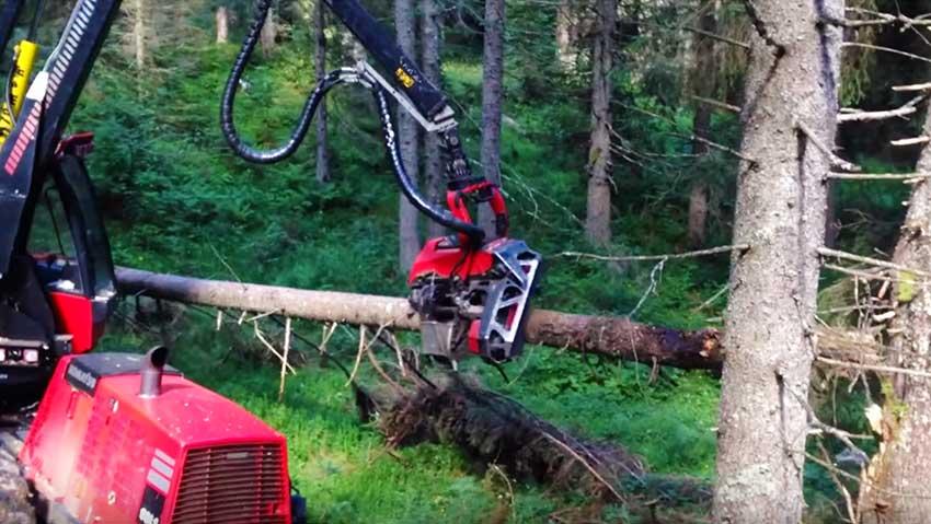 La macchina che taglia gli alberi in tronchi