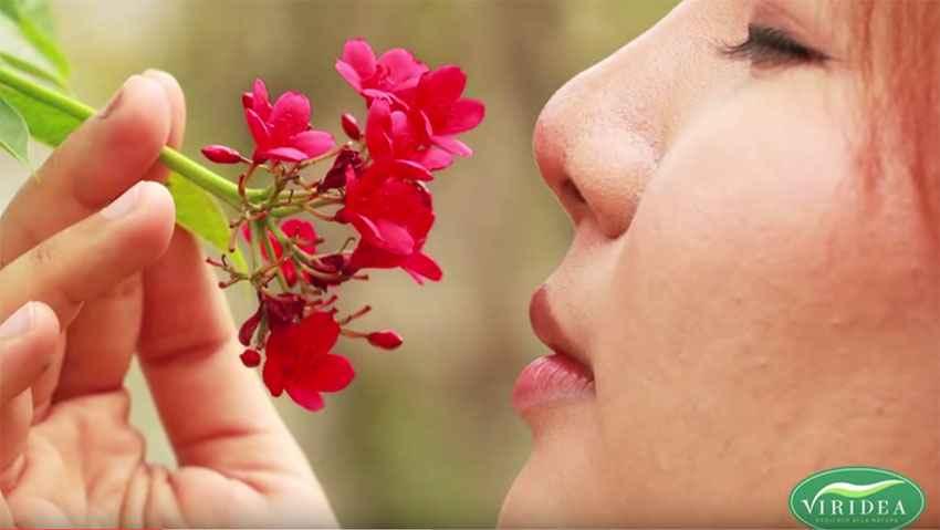 Fragranze in vaso, le migliori piante profumate