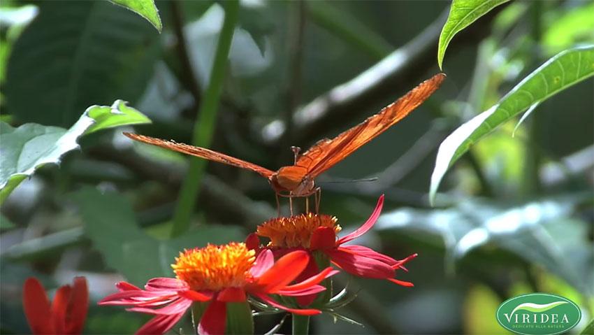 Quali piante scegliere per un giardino pieno di farfalle