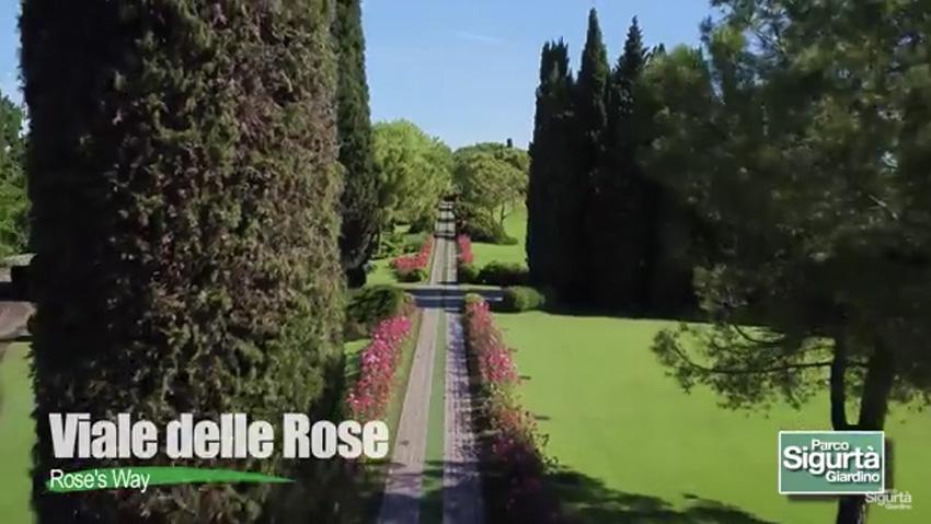La via delle rose