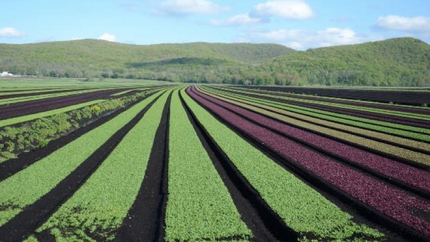 Assofertilizzanti-Federchimica supporta gli agricoltori