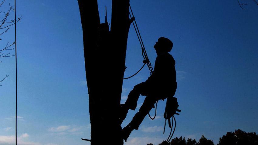 Lavorare in cima agli alberi: un workshop
