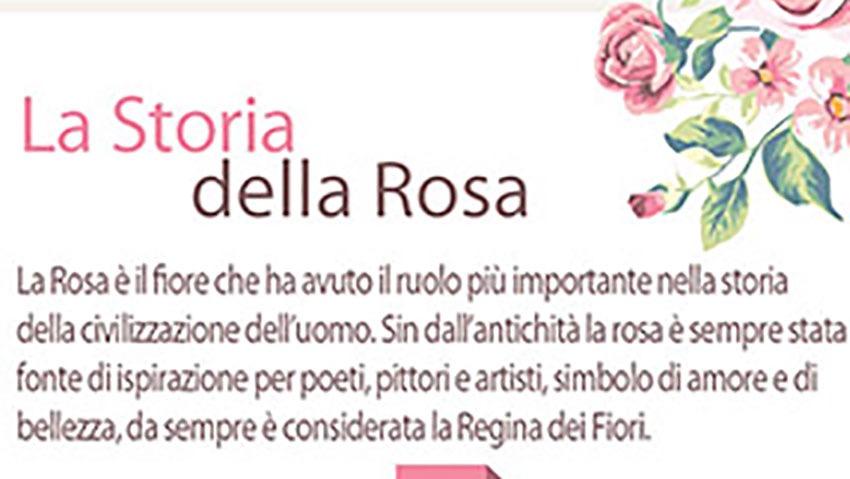 La storia della rosa, la regina dei fiori