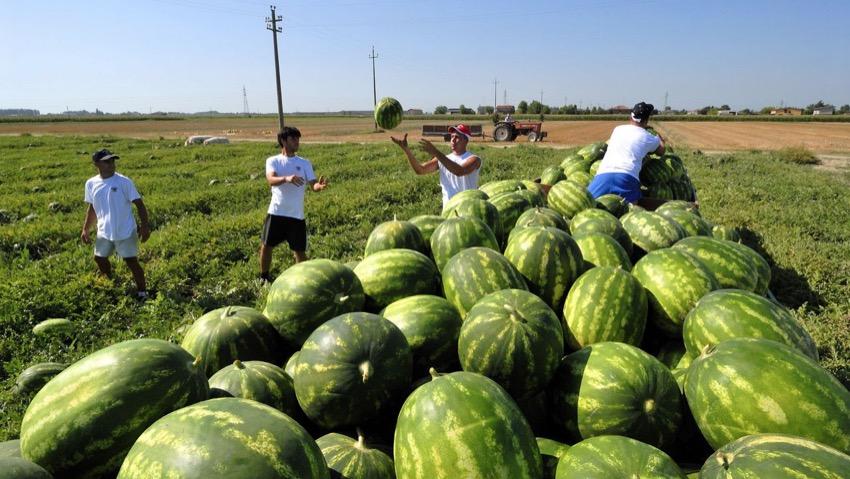 Agevolazioni per l'impiego di giovani in agricoltura