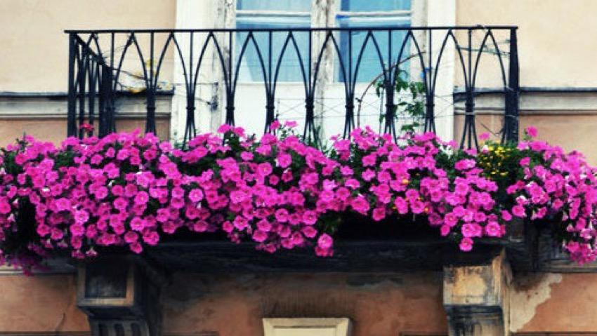 Fiori da balcone: come curarli al meglio