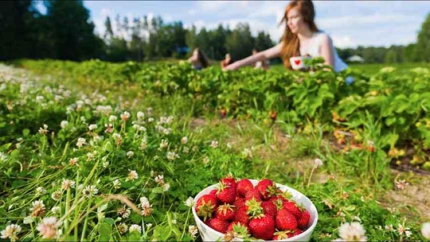 Greenpeace, 7 proposte per un'agricoltura sostenibile
