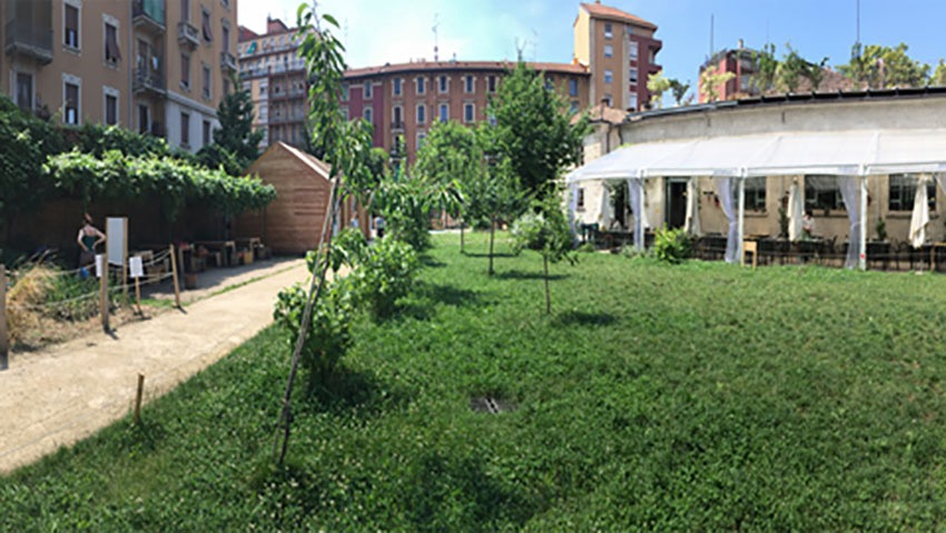 Orto a Milano, un'oasi di campagna in città
