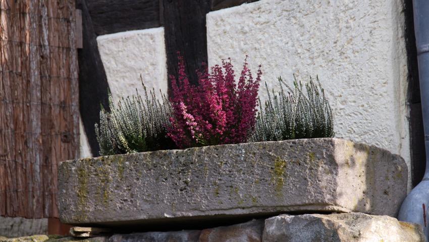 A lezione di balconi fioriti, anche dopo l'estate