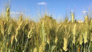 Cons. Agrario d'Abruzzo e Molise