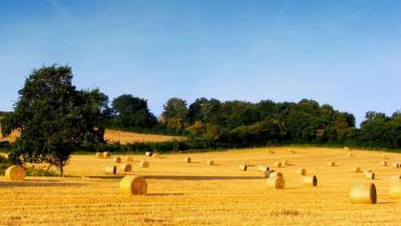 Cons. Agrario di Foggia