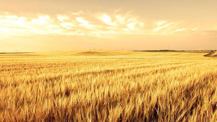 Cons. Agrario delle province del Nord Ovest