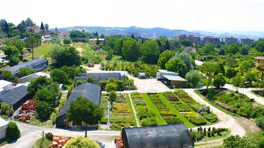 Az. agricola Massarroni Fabio