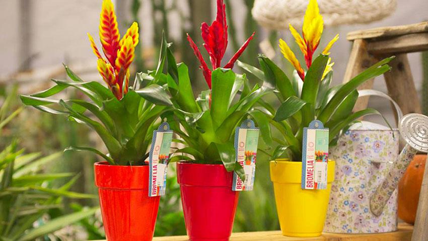 Center Garden Arcobaleno snc