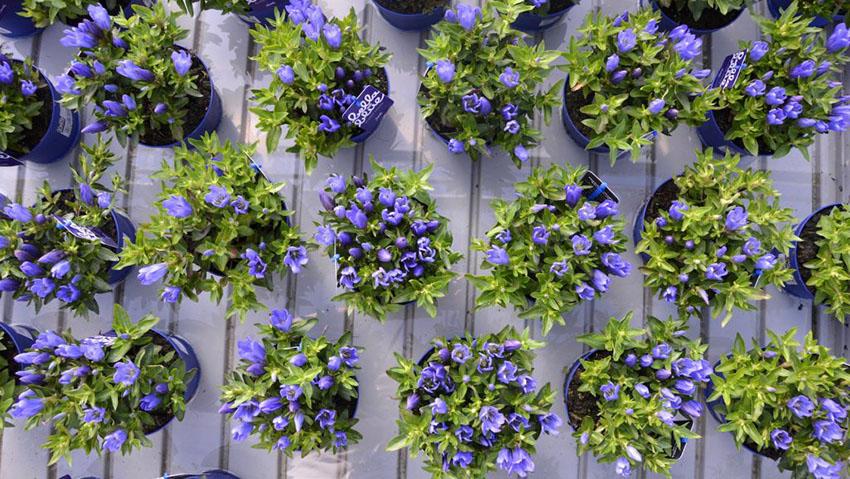 Garden Filippi di Filippi Luigi