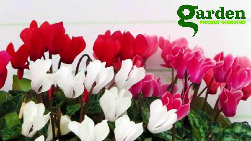 Garden Piccolo Giardino