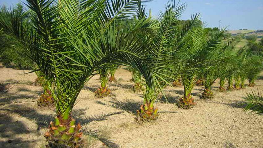 Vivai piante Gabbianelli