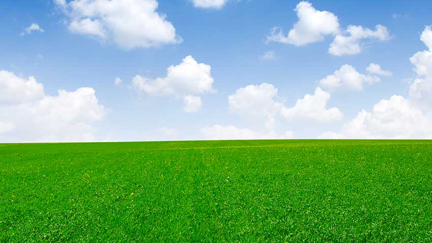 Vitiello agricoltura e giardinaggio