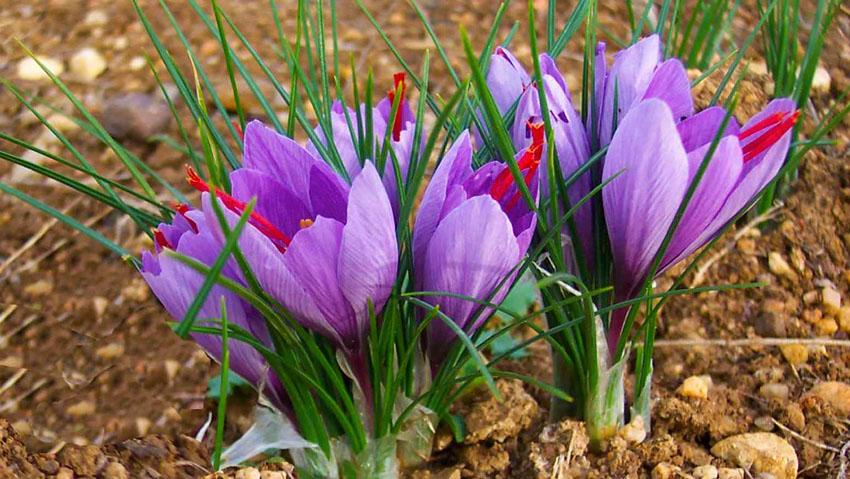 Florarici ss