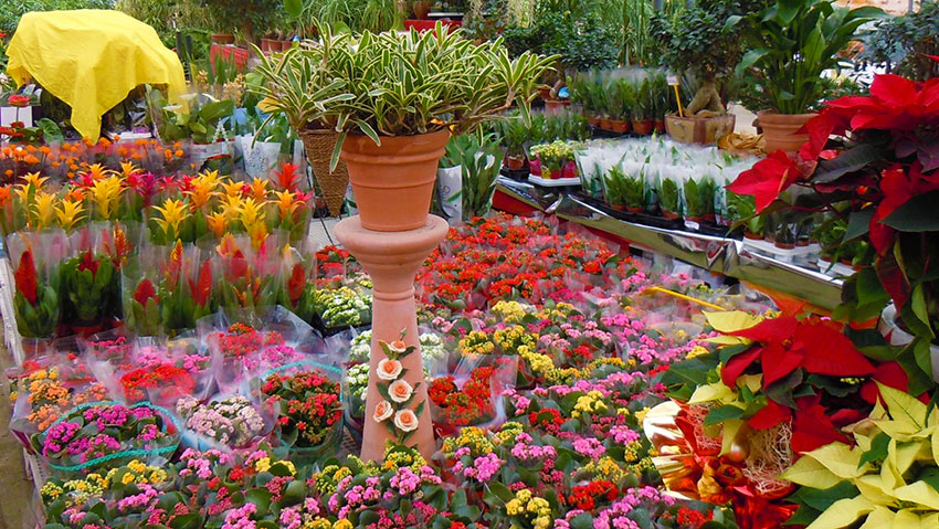 Floricoltura Antonia Stelitano